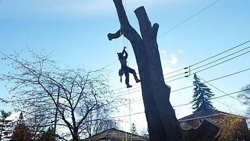 abattage arbre deux-montagnes