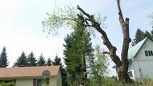 La valeur des arbres