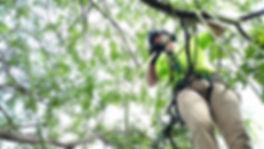Arboriculteur Émondeur Esterel Élagage Arbre