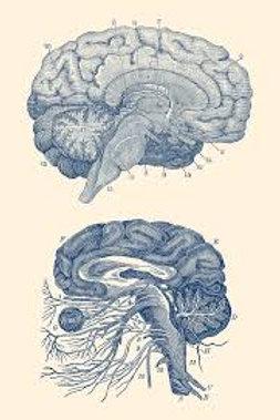 'Ease Your Mind' Formula