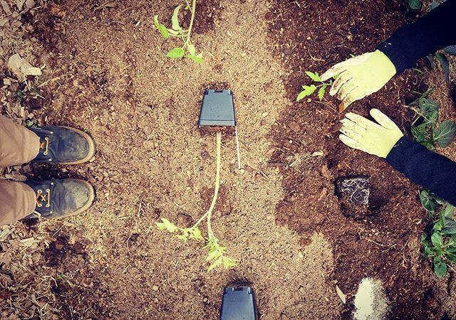 Boots and gloves. Planting the last of t