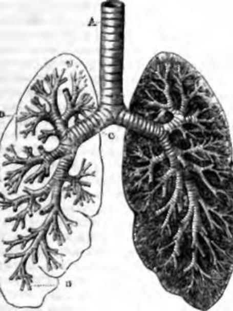 Immune and Respiratory Support Formula