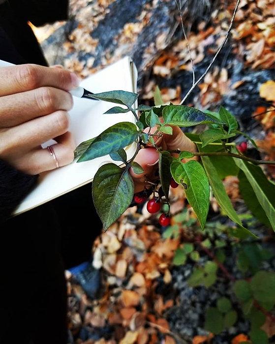Botanizing. Chanti taking notes on a pla