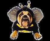 png-transparent-bulldog-pet-halloween-costume-halloween-costume-dog-clothes-animals-carniv