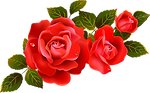 rose_PNG66709.png