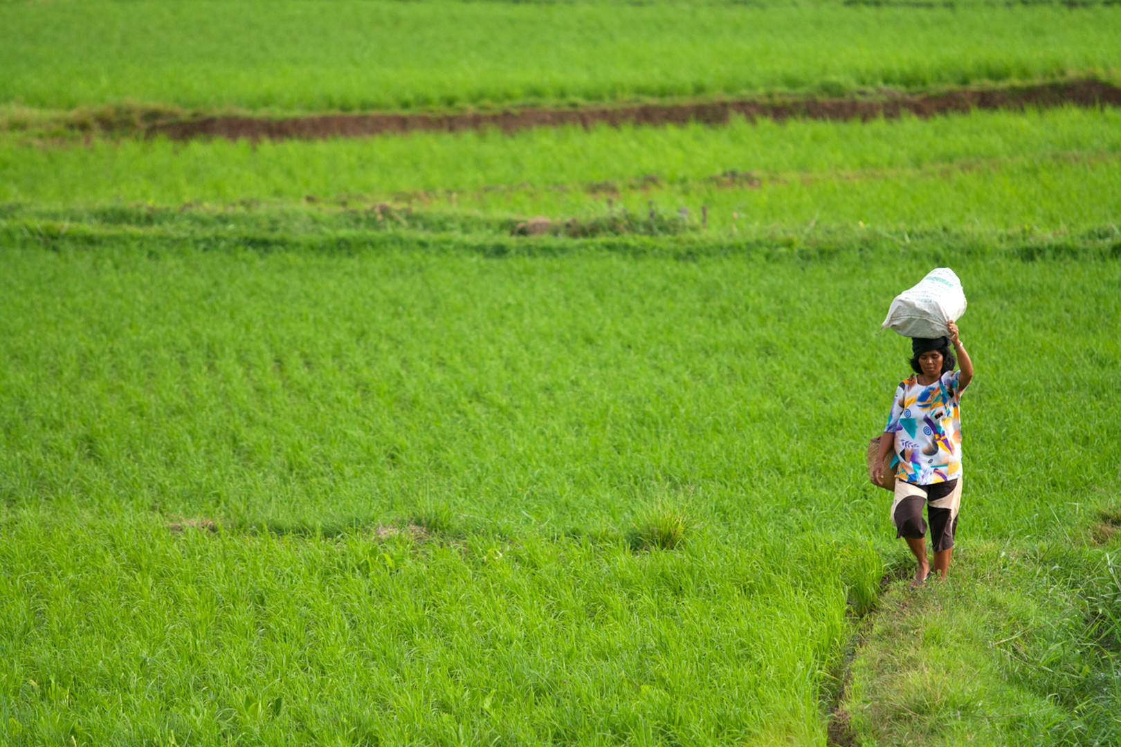Crossing the Paddy Field