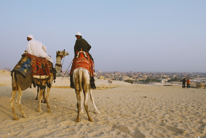 Cairo Camels