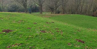 Mole-hills-golf-course.jpg