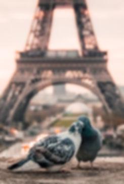 Love Doves in Paris