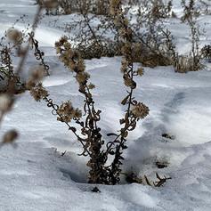 Sanando Inviernos • por Katt