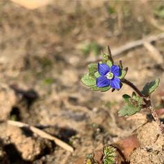 Sólo tú puedes decidir florecer en el desierto • por La que no se rinde