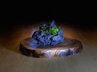 溶岩席に光る苔