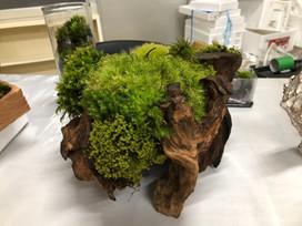 ④流木と苔.JPG