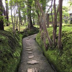 苔のある道