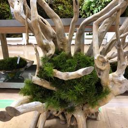 流木と苔のコラボ