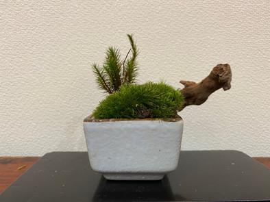 ミニ流木と苔