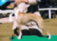 Champion Oakway Gold Envoy