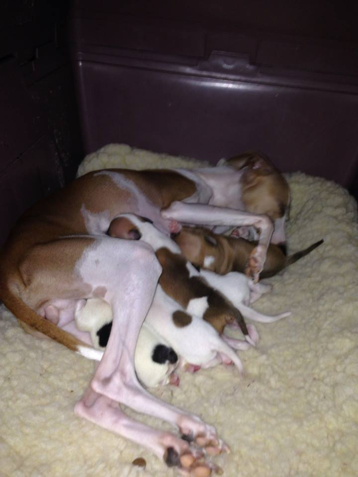 Fergie and her litter mates.
