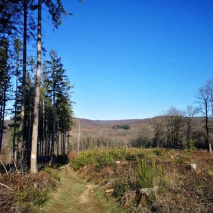 Forêt de Saint-Hubert: Tweedaagse Grupont - Golet