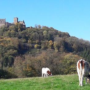 Escapardenne Lee Trail - Dag 1 - Ettelbrück > Goebelsmühle
