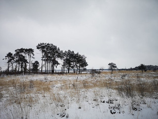 Dagtocht: Kalmthoutse Heide (15,7 km)