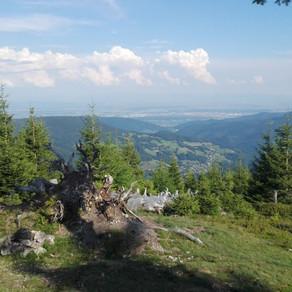 GR5 Traversée des Vosges - Dag 4 - Thannenkirch > Le Haïcot