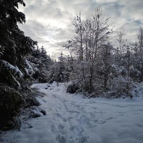 Dagtocht: Luswandeling Libramont (21,4 km)