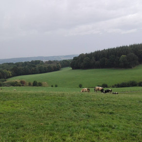 Dagtocht: Spa > Nessonvaux (24,2 km)