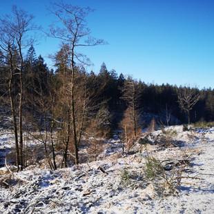 Hertogenwald: Driedaagse luswandeling