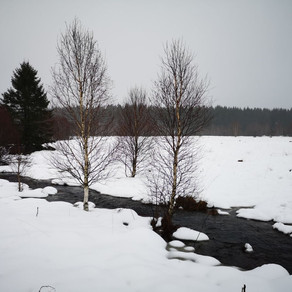 Dagtocht: Elsenborn > Mont Rigi (24,1 km)