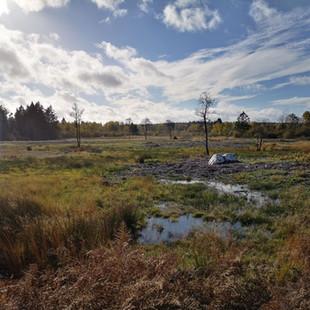 Dagtocht: Luswandeling Hertogenwald en Brackvenn (27,3 km)