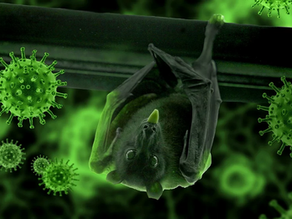 Why are Bats Vectors of Disease?