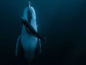 Ocean Dreams: A Deep Dive Into the Science of Whale Sleep