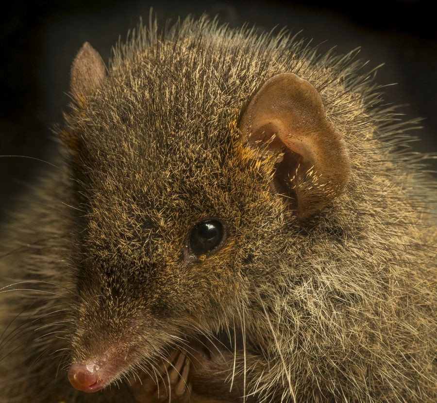 https://www.livescience.com/51083-photos-antechinus-new-species.html