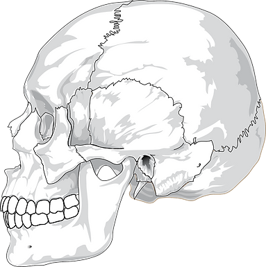 What Are Some Defining Traits of Homo sapiens?