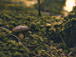 """Mushrooms and Light: A Deep Dive Into the Fungi's """"Eyes"""""""
