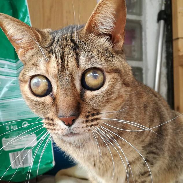 Kitty (ca. 2016)