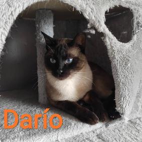 Dario