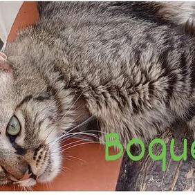 Boqueron