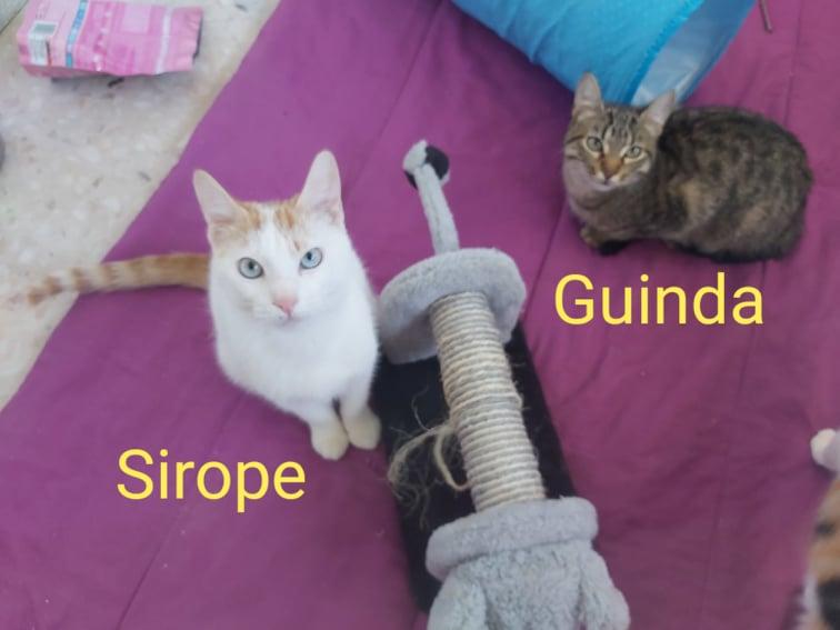 Sirope und Guinda