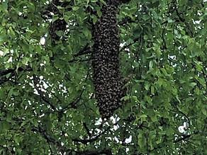 Parvi puussa tai piipussa