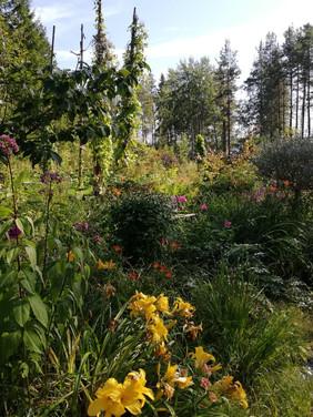 Kielomäki_puutarhaa