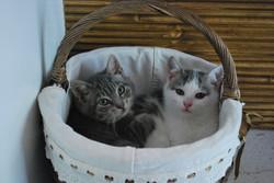 Kielomäki_kissanpojat