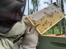 Mehiläisiä kennolla