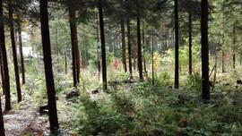 Kielomäki_metsäpuutarhaa_yleis