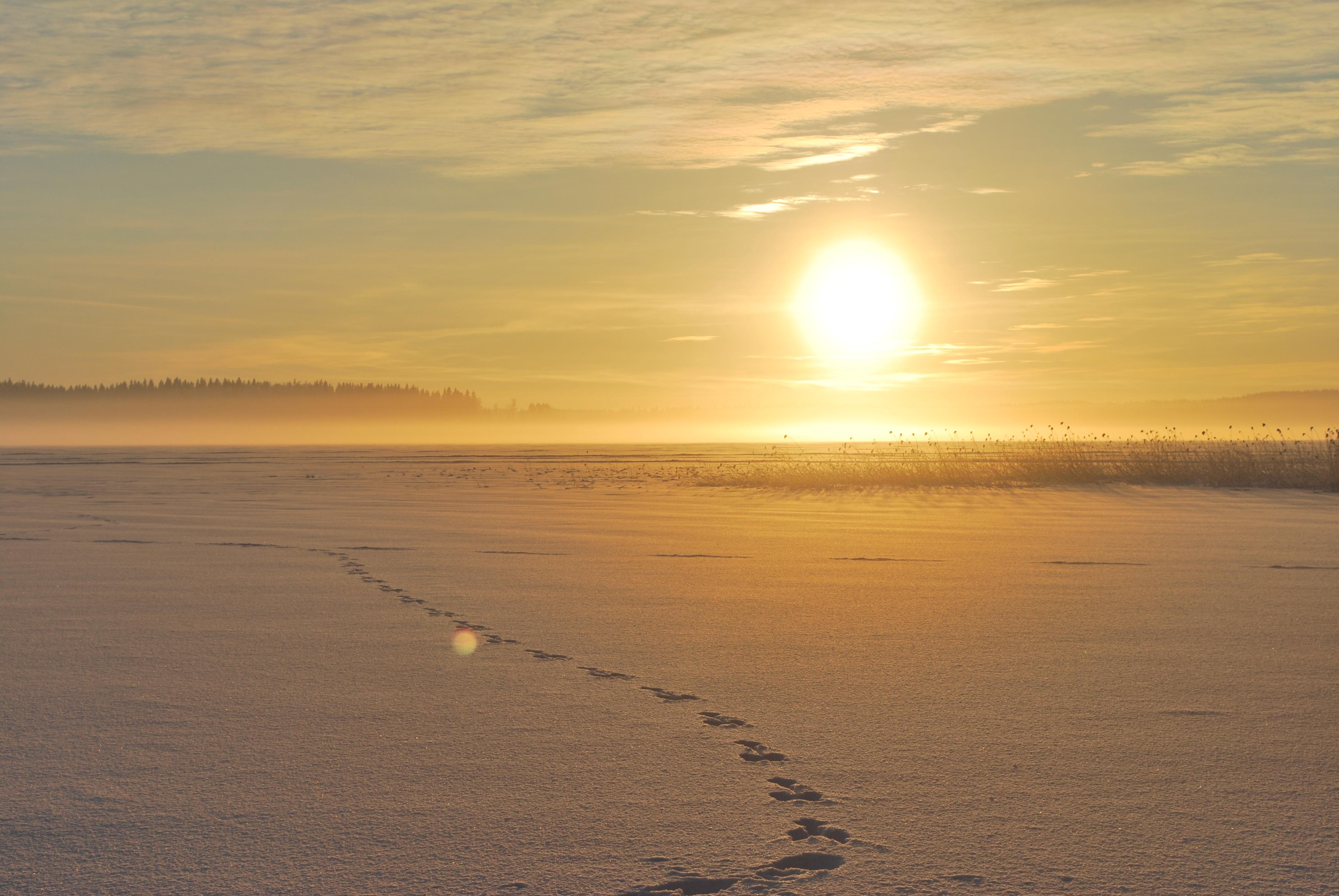 DSC_0014 talviaurinko