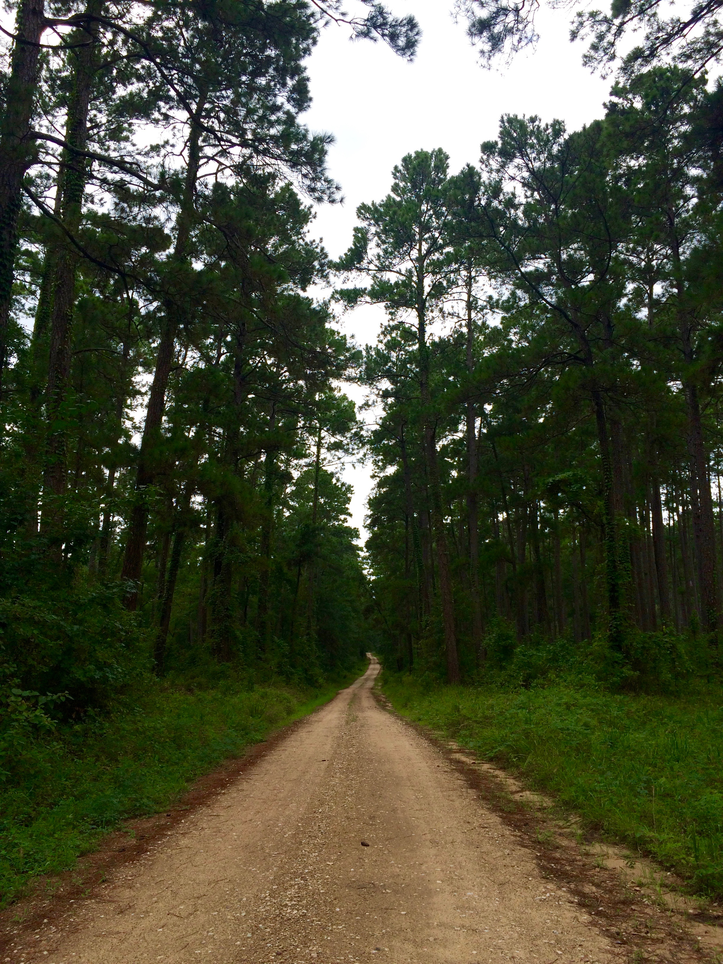 Horse Trails at Sam Houston National Forest