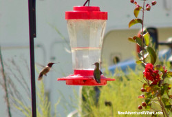 Hummingbirds at New Adventure