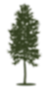 tree only.png