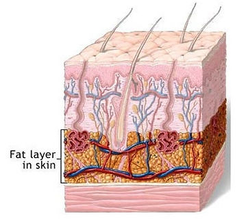 mb2 fat layer skin.jpg